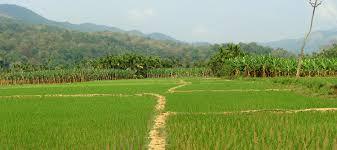eastern and western ghats kaniyanpura corridor in bandipur national park ancf