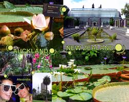 my journey round the world new zealand