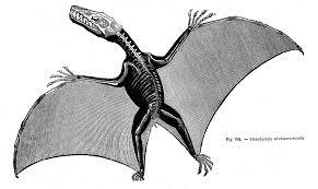 pterodactyl anatomy google search wings pinterest anatomy