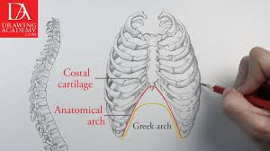 Anatomy Of Human Body Bones Bones In The Human Body Presented By Drawing Academy Com 16 2