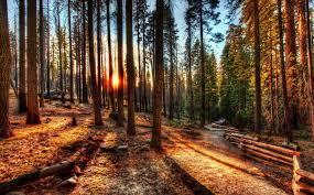 California Forest images Trees trees nature sunset sunrise fence yosemite california jpg