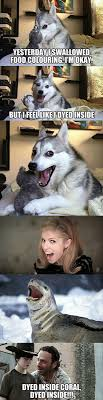 Pun Dog Meme - best 25 bad pun dog ideas on pinterest husky jokes funny husky