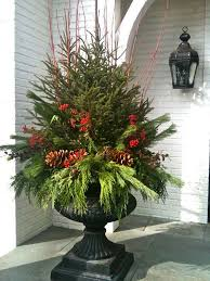 christmas tree plant pict information about home interior and