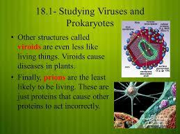 Viroid Diseases In Plants - viruses and prokaryotes studying viruses and prokaryotes a virus