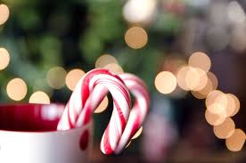 where to buy candy canes candy canes recipe