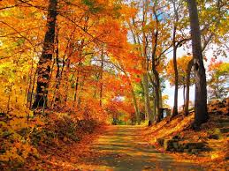 share your fall foliage photos news wicked local cape cod