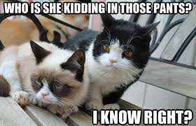 Best Grumpy Cat Memes - grumpy cat meme grumpy cat pictures and angry cat meme