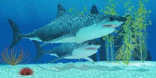 biggest megalodon shark facts about the largest marine predator in history the megalodon