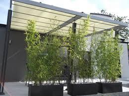 amenagement jardin moderne bambou en pot depuis 2 mois notre maison chany par fifi u0026 nadou