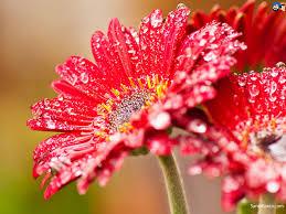 image flowers qygjxz