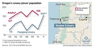 Oregon Coastline Map by Snowy Plovers Show Encouraging Signs Of Recovery Along Oregon