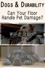 Laminate Flooring And Dogs Best 25 Discount Laminate Flooring Ideas On Pinterest Discount