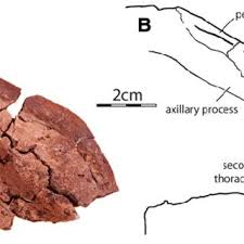elys bureau de change a kinosternoid from the late cretaceous hell creek formation of