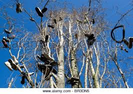trees with many shoes hung up show the location where pusher sell