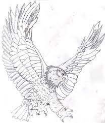 drawn bald eagle line drawing pencil and in color drawn bald