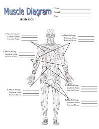 muscle worksheets fioradesignstudio
