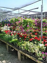 flower power garden centre terrey hills sydney bonds nursery pla31