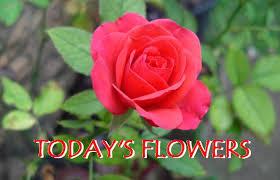 flowers today today s flowers today s flowers 149