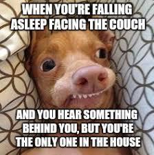 Ph Memes - ph dog memes imgflip
