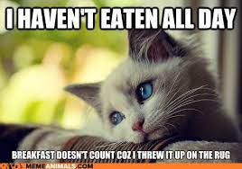 Puke Meme - i can has cheezburger first world cat problems funny animals