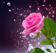 pictures beautiful roses elsoar