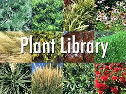 Garden Club Ideas Landscape Ideas For Central Florida Landscape Plants Garden Design