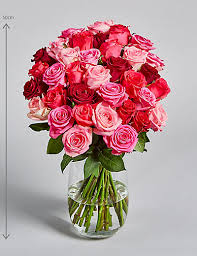 Flower Rose Roses Red Pink White Rose Flowers U0026 Bouquets M U0026s