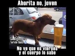 imagenes de viernes chelero perrito chelero youtube