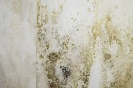 Mold Smell In Bathroom How To Get Rid Of Musty Smell Thedehumidifierexperts