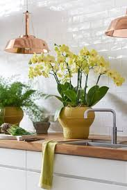 48 best orchids images on pinterest orchids cambridge and blue