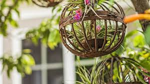 How To Arrange Indoor Plants by Air Plant Display Ideas