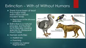 endangered species ppt video online download