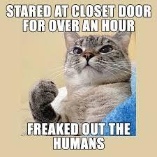 Success Cat Meme - i m success cat winning is what i do album on imgur