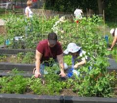 Urban Gardens Denver - 47 best community gardens images on pinterest gardening tips