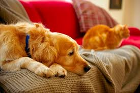 best sofa fabric for dogs the best furniture fabric for pet owners cuteness