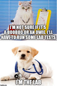 Dog Doctor Meme - doctor cat and the lab test imgflip