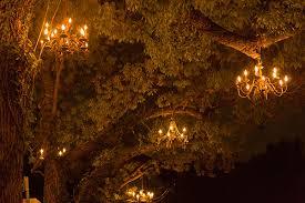 Chandelier Tree Address The Chandelier Tree Of Silver Lake Los Angeles Surfdog
