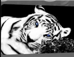large tiger canvas picture black white blue a0 45 x 32
