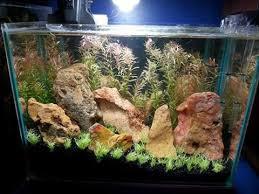 Marine Aquascaping Techniques 247 Best Aquariums Images On Pinterest Aquarium Ideas Planted