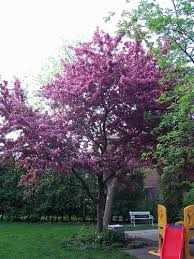 trees for small backyards large and beautiful photos photo to