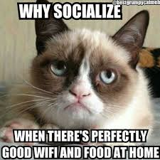 Angry Cat Meme - why are cats afraid of green cucumber grumpy cat feelings and cat