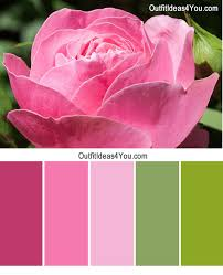 pink color schemes pink roses outfit color combinations green billion estates 103547