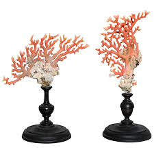 956 best coral shells images on shells coral and