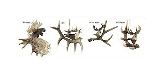 antler ornaments with big cabela s