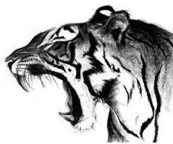 25 beautiful tiger art ideas on pinterest tiger drawing tiger