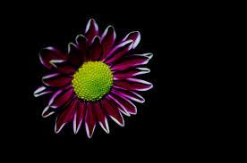 www imicrovision com flower ideas