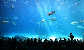 taking children to an aquarium is a lesson in cruelty aeon ideas