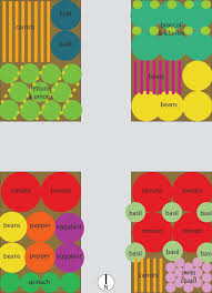 Companion Garden Layout Vegetable Garden Plans For Raised Beds Loooove The Lettuce And