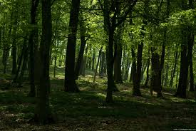forest images Free big forest pictures high resolution images jpg
