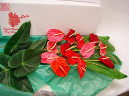 Wholesale Flowers Miami Shipping Or Pick Up Of Wholesale Tropical Flowers Miami